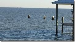 2011-12-30-Galveston (4)